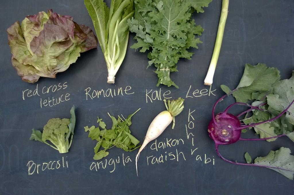 CSA_lettuce-kale-leeks