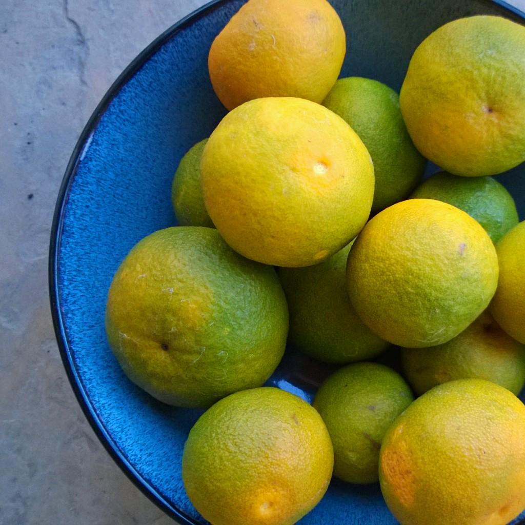 mandarin oranges_1x1