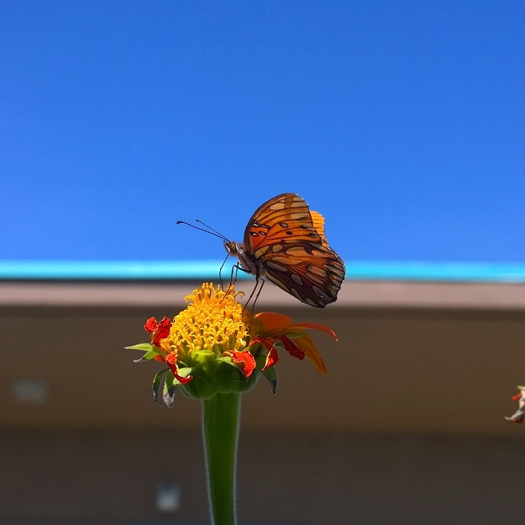 A butterfly at one of my gardens :)
